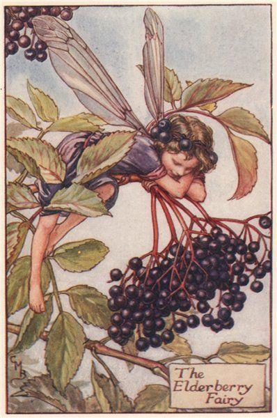 la fata del sambuco, fata, sambuco, elderberry, elderberry  fairy, sambuco, folklore, magia